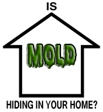 Mold could be in your home!
